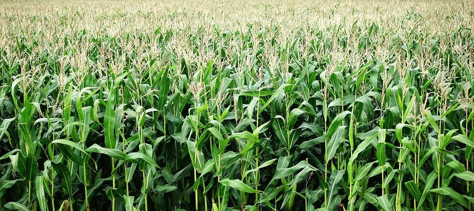 Vegware PLA corn bioplastic plastic biodegradable compostable